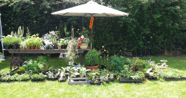 Plants for sale on a stall at Lach Dennis fete day